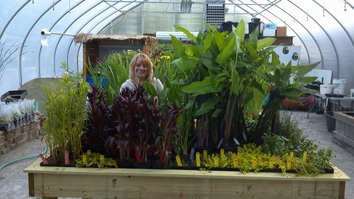 WaterScape Design Pond Plant Store and Supplies